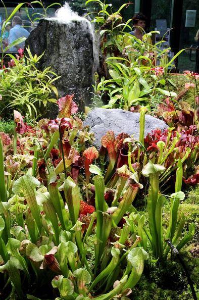 Хищные растения в Ботаническом саду МГУ Аптекарский огород