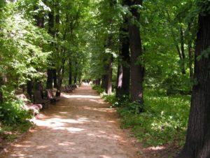 Дендрарий ботанического сада МГУ