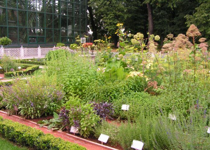 Сад лекарственных трав в ботаническом саду МГУ