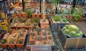 Коллекция суккулентов в ботаническом саду МГУ