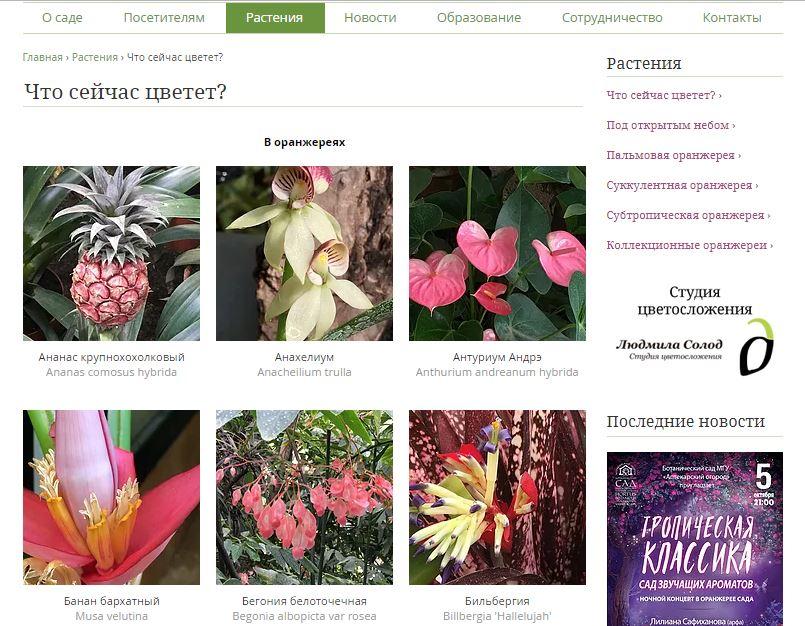 """Вкладка """"Растения"""" на официальном сайте Аптекарского огорода"""